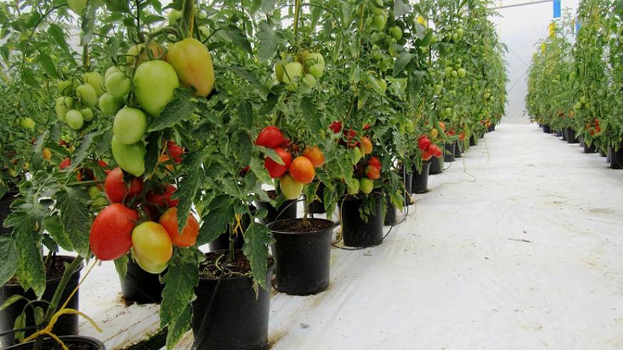 Government to scale up use of greenhouses for high value