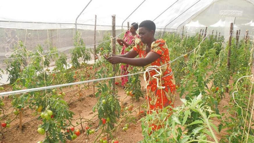 Women entrepreneurs including those in farming have been urged to embrace innovative technologies. / File
