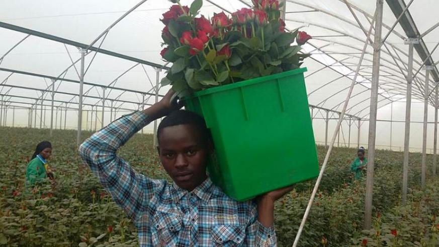 There are still many investment opportunities in the flower sector that Chinese firms can exploit. / File