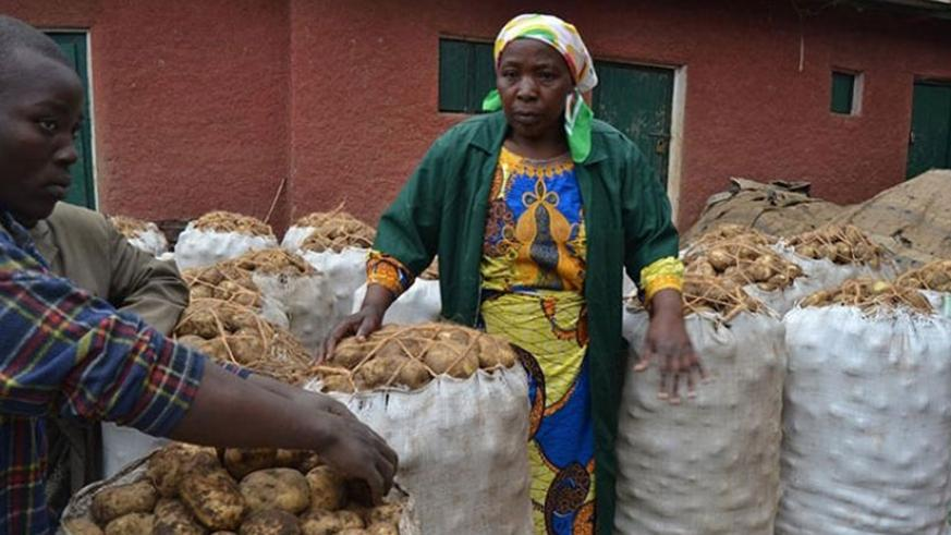 Farmers in Nyabihu prepare to transport their produce to the market. Potato growers want better varieties. (File)