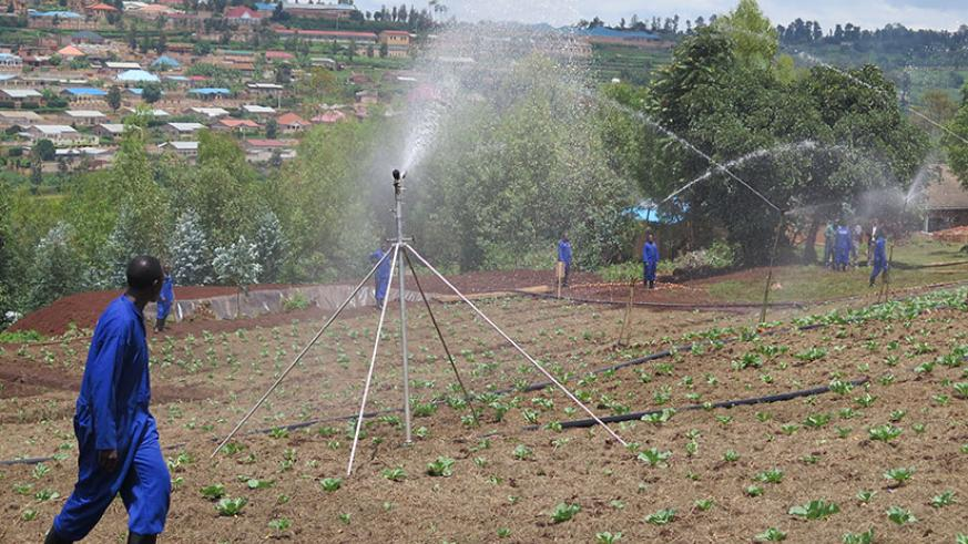 Raingun irrigation technology being used to water vegetables on a farm in Huye District. / E. Ntirenganya
