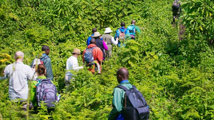 Tourists trek to Karisimbi camp in northwestern Rwanda. File.