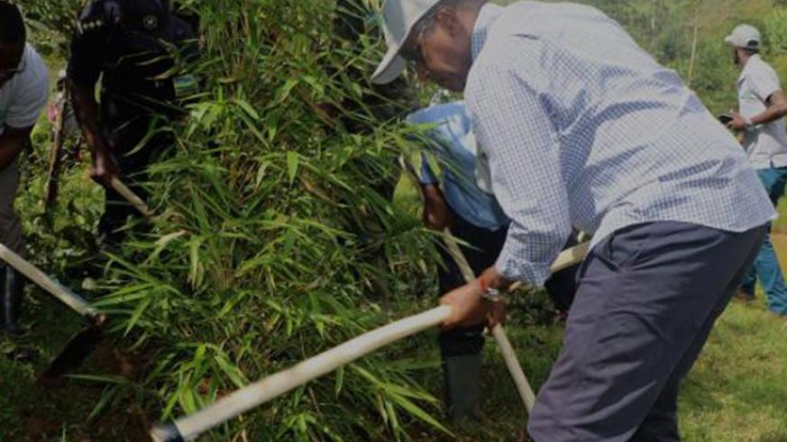Residents weed under bamboo trees planted as part of the green growth agenda. (Courtesy)