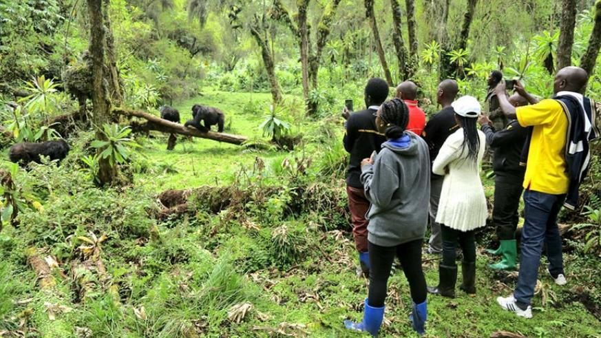 Some of the customer service champions watching the mountain gorillas during the trip. (Photos by Julius Bizimungu)