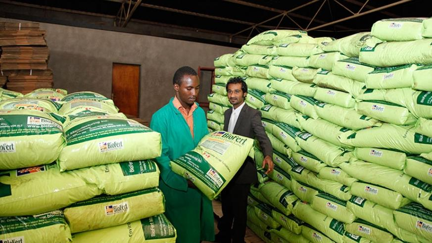 A worker lifts a bag of fertilisers in one of the stores in Gikondo. Timothy Kisambira.