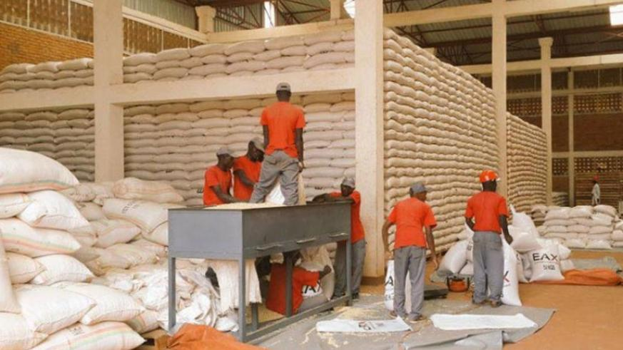 Workers during a sorting exercise of maize at a warehouse. File