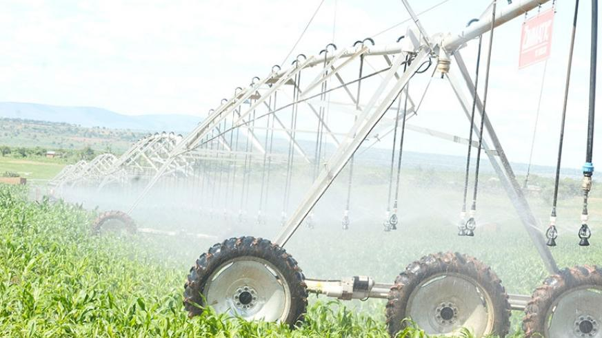 The revised national budget sets aside Rwf3 billion for irrigation. File.